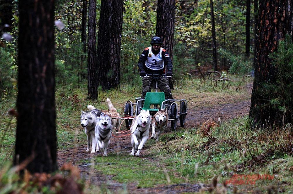 На старт спортсмены выходили по категориям. Собаки в упряжке тянули самокаты, велосипеды, карты.