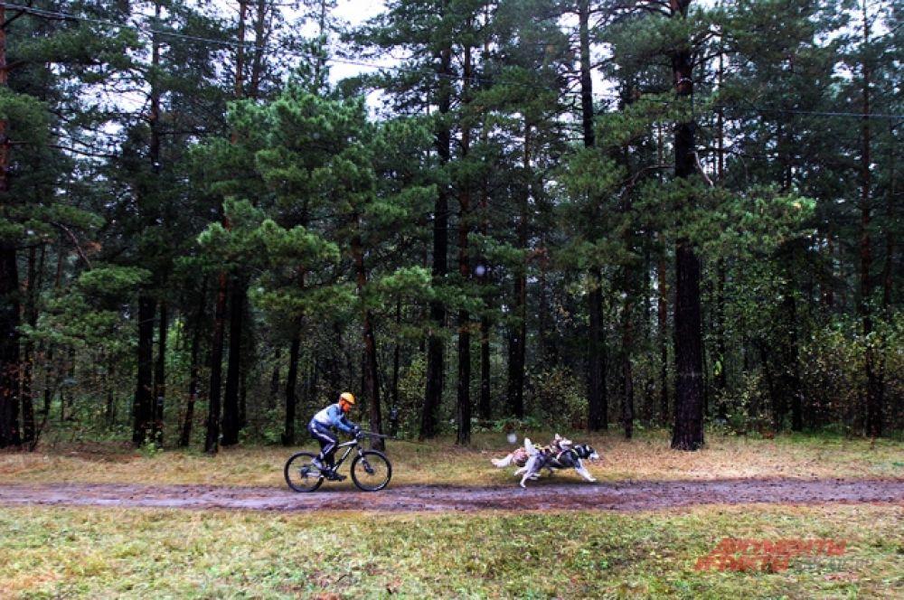 Соревнования в бесснежном лесу по зрелищности не уступали зимним соревнованиям.