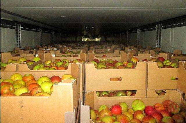 Республика Белоруссия в10 раз увеличила объёмы поставок яблок в Российскую Федерацию через Брянск