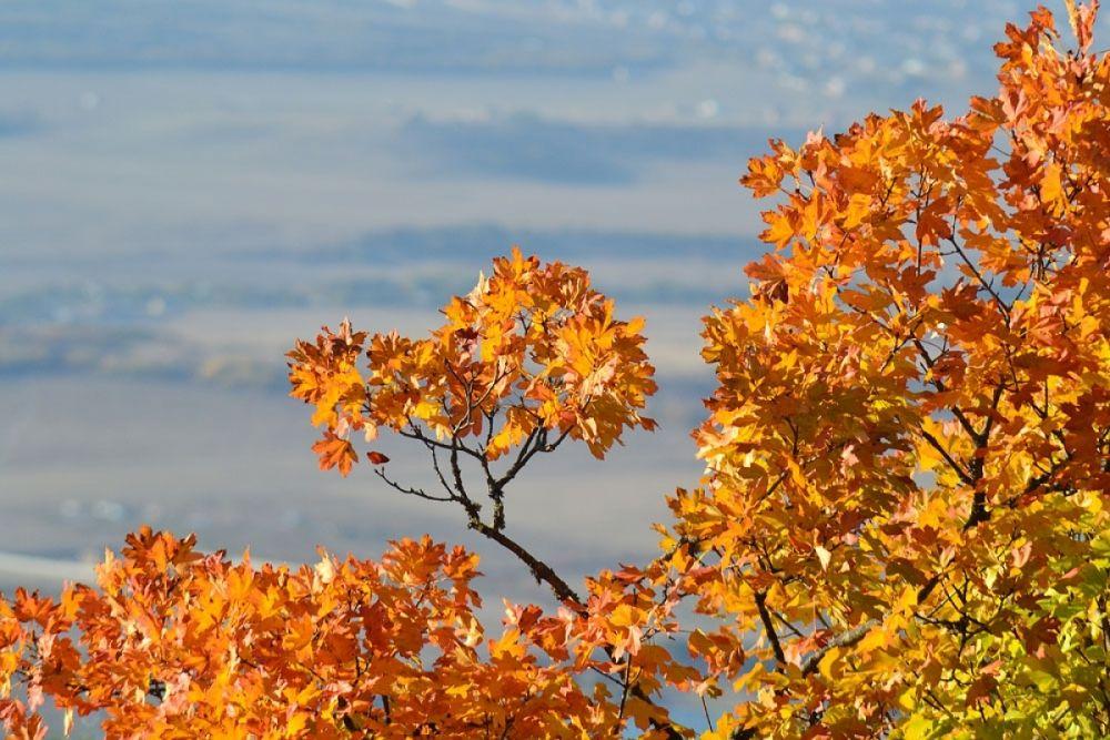 Осеннее буйство красок в Крыму - большая редкость. Чаще листья на деревьях остаются зелёными до ноября, а затем, с первыми ночными заморозками, осыпаются, укрывая зелёным ковром пожухлую траву.