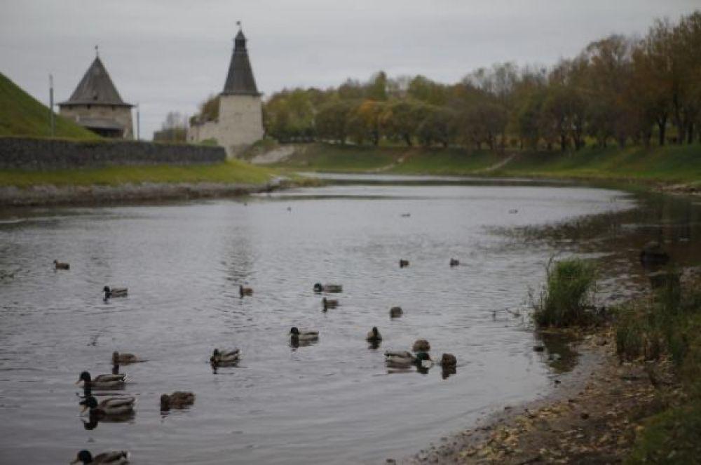 Осень в Пскове - это не только «унылая пора, очей очарованье», но и повод насладиться осенними красотами города.