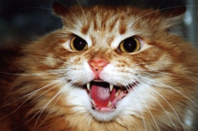 ВВоронежской области отыскали 12 бешеных кошек, 2-х барсуков ихорька