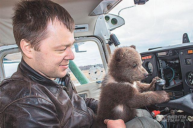 Медвежонок - как ребенок: требует к себе внимания.