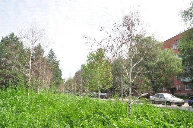 На этот раз активисты займутся озеленением в городке нефтяников.