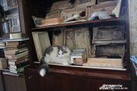 В коллекции Евгения Шевякова больше сотни экспонатов: кирпичей, печных изразцов, напольной плитки.