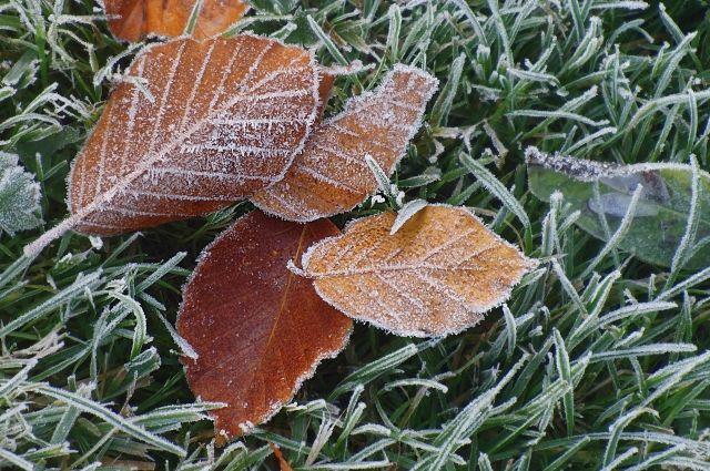 Синоптики обещали Кузбассу похолодание доминус 15