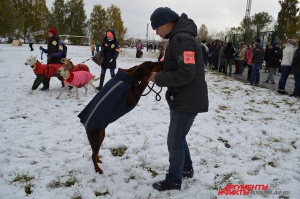 Отметим, что интерес к помощи животным стал активно возникать последние годы - появилось множество благотворительных ярмарок, фотосессий и праздников, в которых кемеровчане активно принимают участие.
