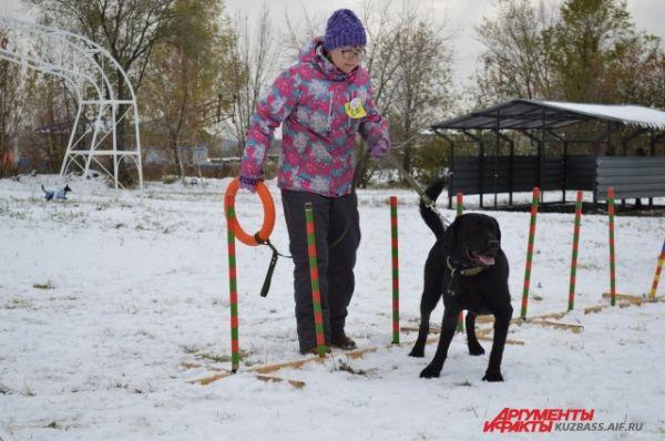 Собаки показывали все свои способности - к примеру, как они научились ходить «змейкой».