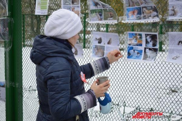 На фестивале всегда рассказывают и показывают бездомышей, пусть и на информационных «стендах». Вдруг кто-то захочет завести себе нового питомца?