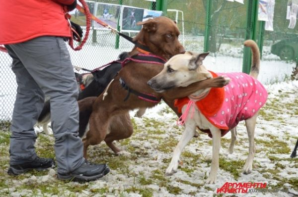 В этот раз на нужды БФ «Забудь зверушек» удалось собрать больше 20 тысяч рублей, которые направят на приютскую стройку хорошего помещения для животных. А один из бездомных псов, серенький той-пудель, даже нашёл свой дом.