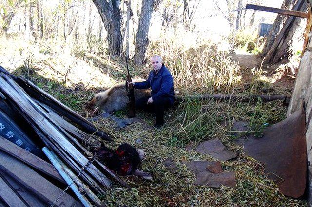 ВКамчатском крае голодная медведица напала насобак