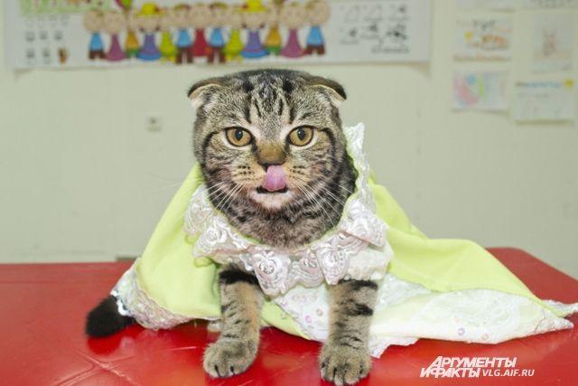ВСибири кошка сискусственными лапами сделала первые шаги