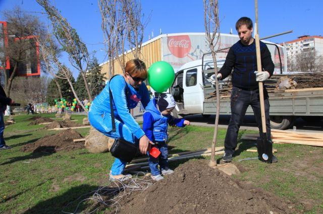 ВРостовской области высадили неменее 92 тыс. деревьев задень