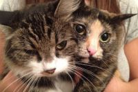 Руся и Майя – две кошки-путешественницы.