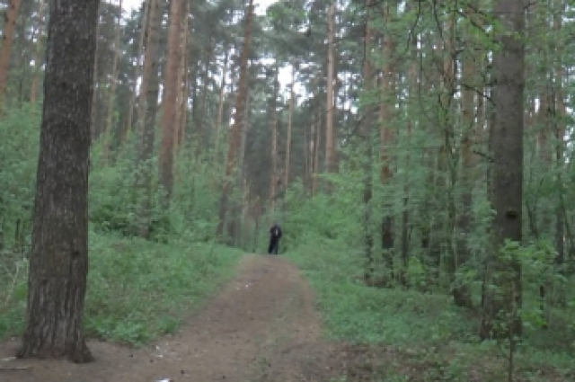 Грибник изЧувашии потерялся влесу, где бродят волки