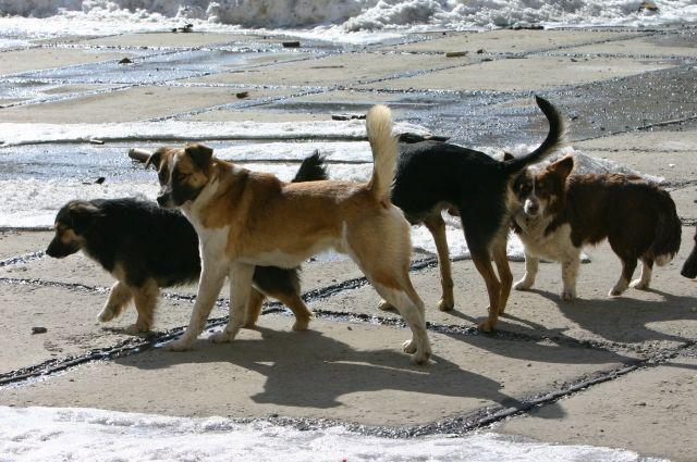 Только мизерный процент животных рождается на улице, остальных выкидывают хозяева.