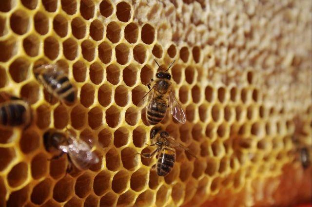 Мёд в сотах - это не только вкусно, но и полезно.