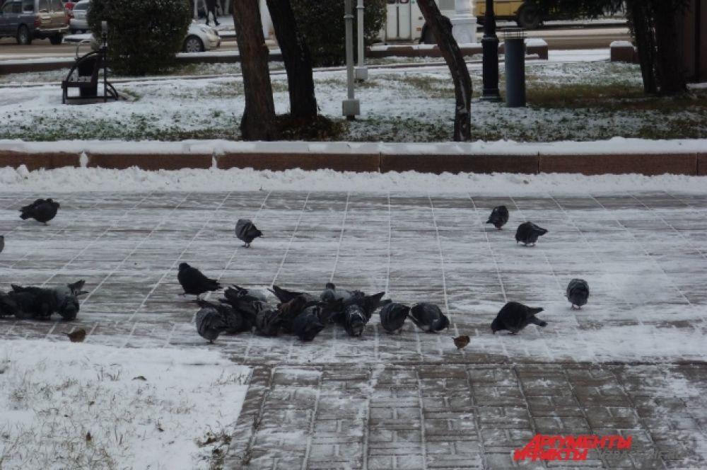 Горожане в холодное время года стараются кормить птиц на улицах.