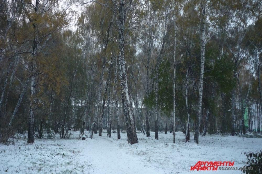 Березовая роща в Кировском районе города преобразилась, нарядившись в белое.