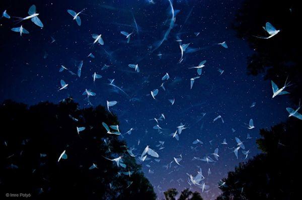 Потрясающее вечернее фото в жанре фотографий с беспозвоночными животными сделал Imre Potyó. Фото этого финалиста было сделано в Венгрии