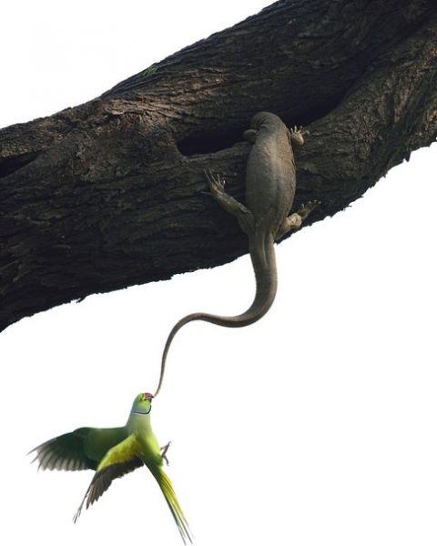 Лучшим фотографом в жанре фотографий с птицами стал Ganesh H Shankar. Это фото из национального парка Индии