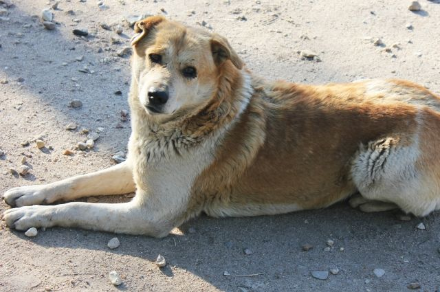 Новосибирские волонтеры стерилизуют собак в Индии