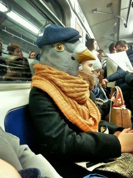 Ничего необычного, просто голубь едет на работу в метро. Можно предположить, что едет он в департамент по обгаживанию людей