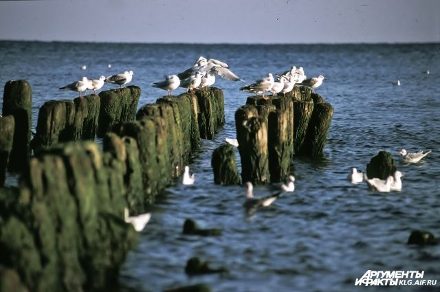 Ученые объяснили, почему Балтийское море ушло от берега на 15-20 метров.