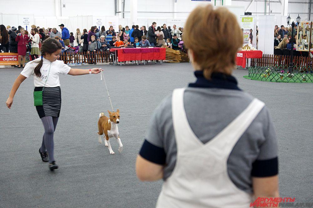 На нескольких рингах проходят различные турниры по преодолению препятствий на время, прыжки в высоту среди питомцев, танцы и состязания по перетаскиванию грузов собаками.