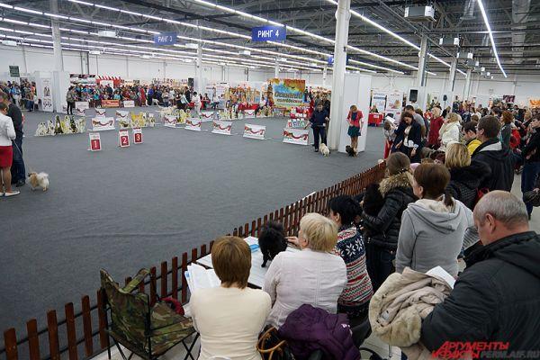 Также на отдельных площадках состоятся и костюмированные ринги – с демонстрацией костюмов для собак.