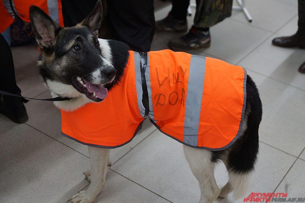Помимо породистых собак, на выставке представлены беспородные животные, которых отдают в добрые руки пермские приюты.