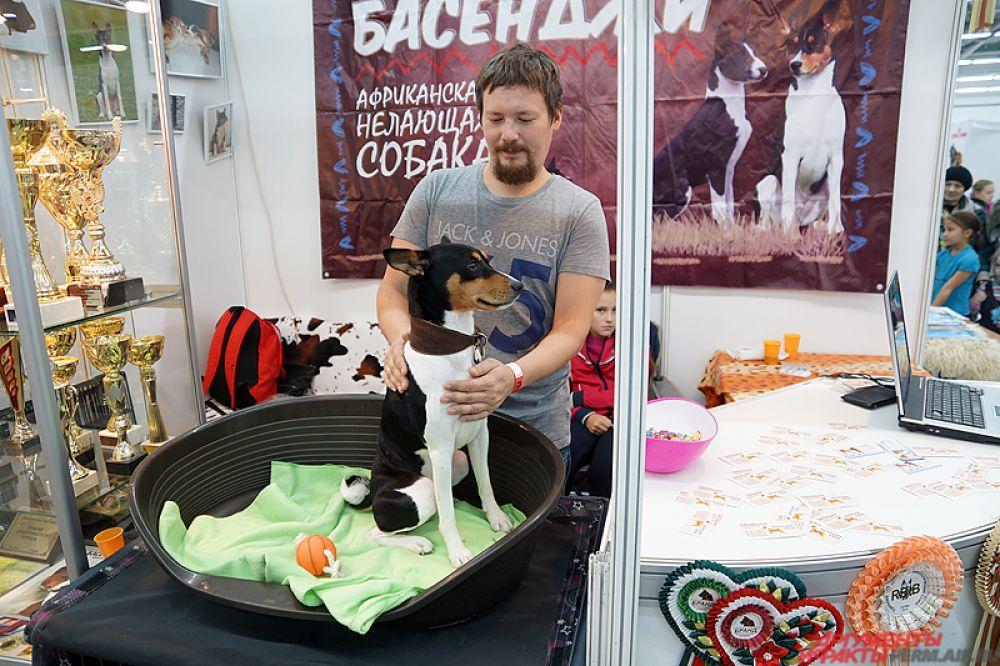 В рамках всероссийской выставки пройдут монопородные выставки таких пород, как керри блю терьер, китайская хохлатая собака и др.