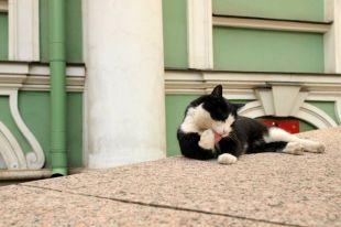 Коты стали жить при дворцах Петербурга 271 год назад.