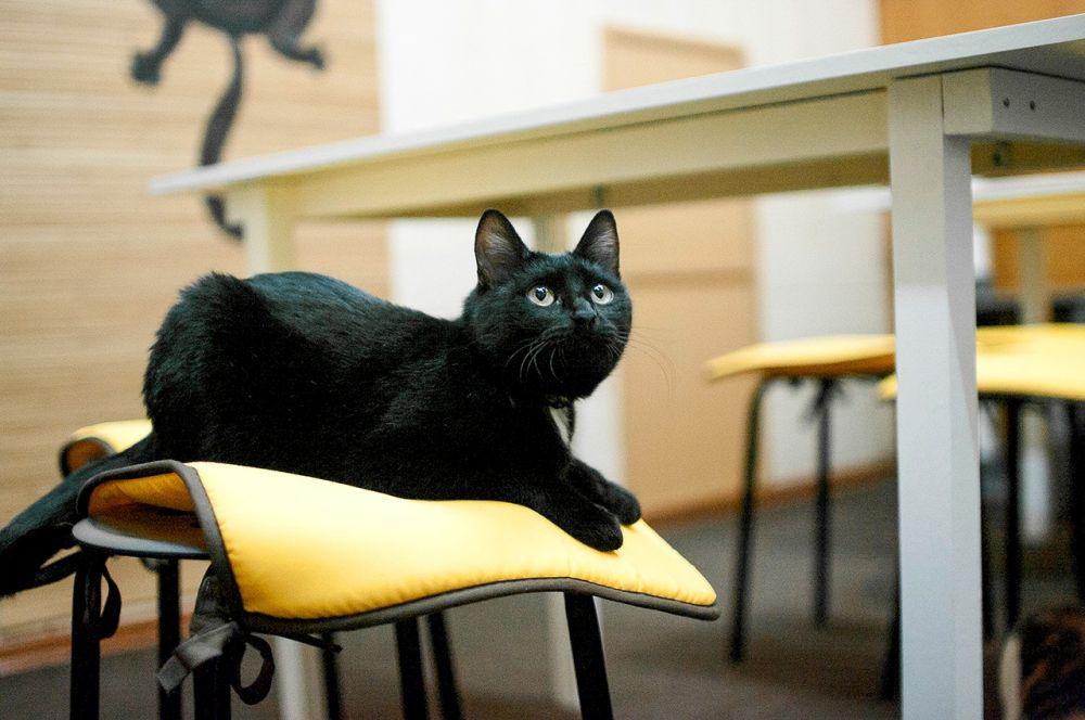 Изабелла. Поначалу ее пугало большое количество людей в кафе, но она быстро освоилась. Кошка еще молодая  - ей около года, а потому любит играть. Особые приметы -  белые пятнышки на груди и животе, любит делать удивленное выражение мордочки.