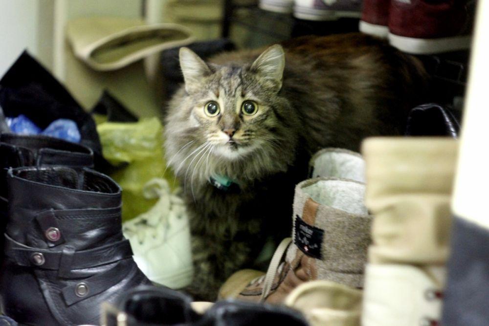 Белка, около 1,5 лет. Ласковая и очень терпеливая кошка. Раньше Белка жила во дворе и была любимицей его обитателей. Кошку катали на санках и в коляске, чему она почти не сопротивлялась.