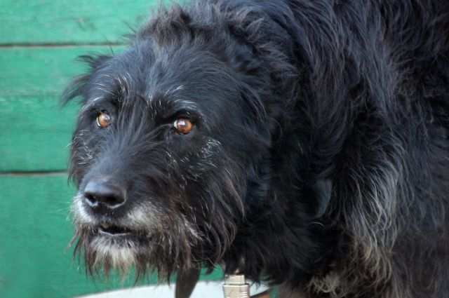 От напавших собак пенсионерку спасла девушка.
