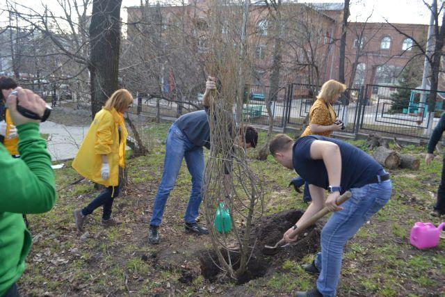 Активисты высаживали хвойные и лиственные деревья.
