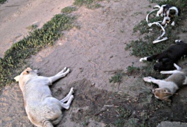 «Собачий патруль» зачистит Ростов-на-Дону отбездомных животных кЧМ