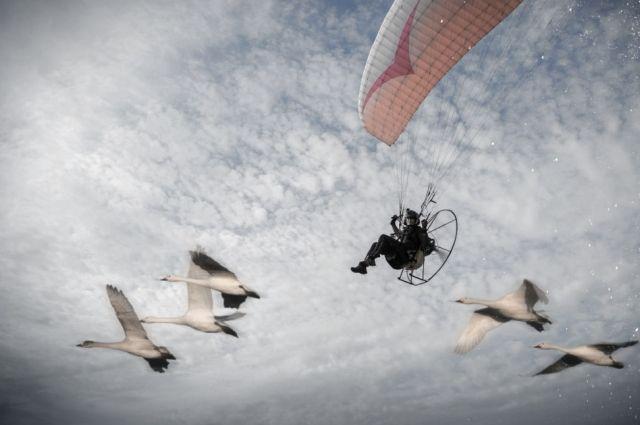 Орнитолог решила проделать пути миграции вместе с русскими лебедями.