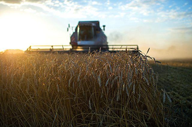 Наша страна стала абсолютным лидером по экспорту пшеницы.