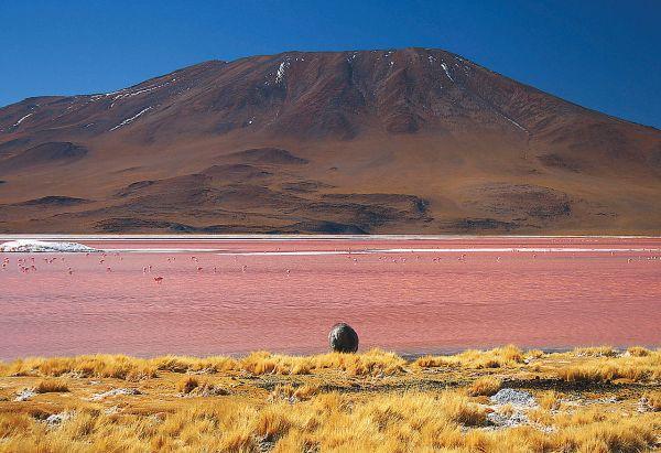 Лагуна-Колорадо – минеральное озеро, расположенное в национальном заповеднике Эдуардо Авароа в юго-западной части Боливии недалеко от границы с Чили.