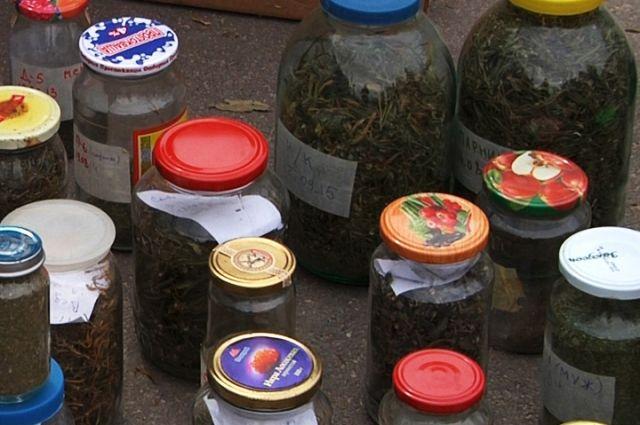 Полиция уничтожила 3 гектара дикорастущих наркотиков
