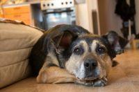 Каждый день волонтеры узнают о новых случаях жестокого обращения с животными.