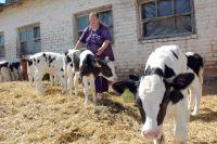 Чтобы придать особую значимость отрасли, Виктор Назаров предложил объявить 2017-й Годом животноводства в Омской области.