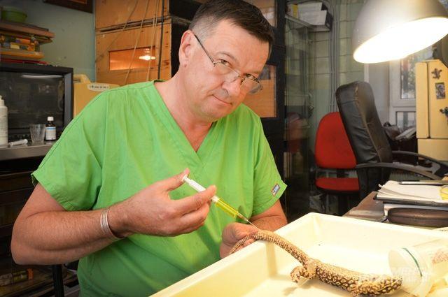 Дмитрий Васильев готовит к операции варана. Эти ящерицы могут достигать 3 м в длину.