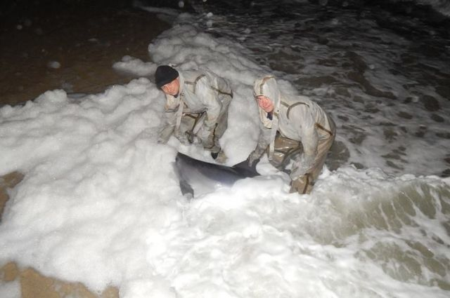 Штормовые волны выбросили наберег дельфина