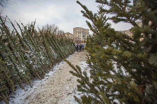 В 2016 году в Пензе будет организована доставка зеленых красавиц на дом.