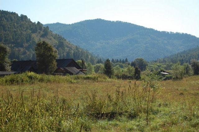 На территории Горной Шории произрастает более 5 тыс. видов лекарственных трав.