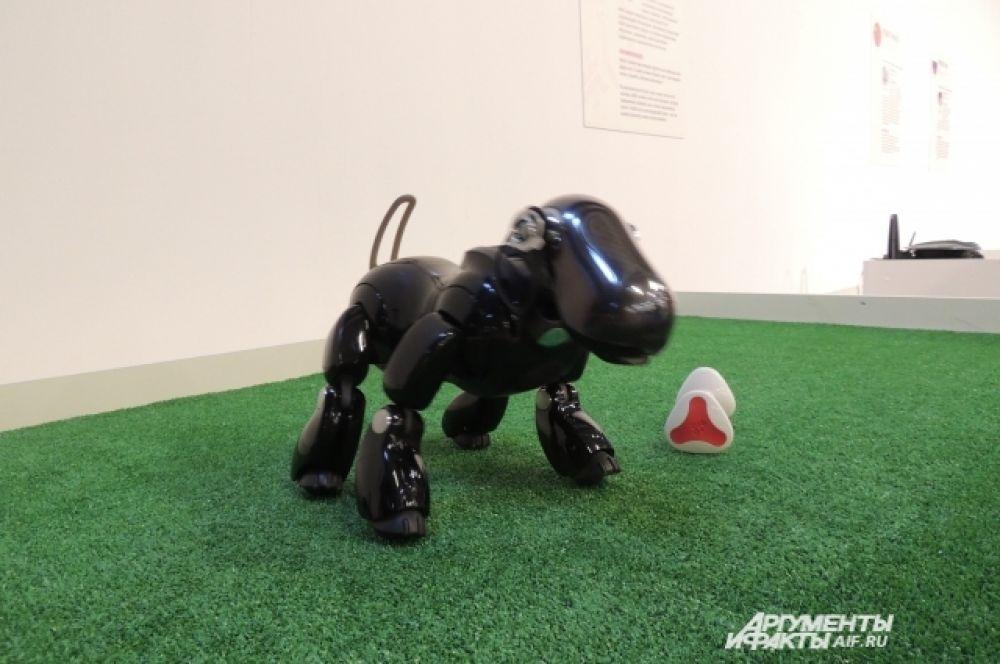 Робот-собака, созданная в 1999 году в Японии, может играть, бегать и реагировать на речь человека.