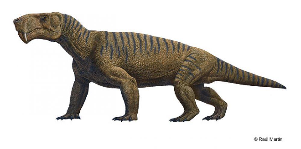 Иностранцевия - крупный хищник, открытый в1898 году. Найдены иностранцевии на берегах Северной Двины и в Оренбургской области. Название дано в честь русского геолога Александра Иностранцева. У иностранцевии был мощный хвост, узкий и удлинённый череп. С одной стороны, животное принято считать пресмыкающимся, а с другой - её кожа была лишена чешуи, некоторые палеонтологи предполагают, что животное могло быть покрыто шерстью. В целом эти хищники напоминали по образу жизни появившихся позже саблезубых кошек, охотились они на парейазавров и крупных дицинодонтов. Считается полуводным или даже водным